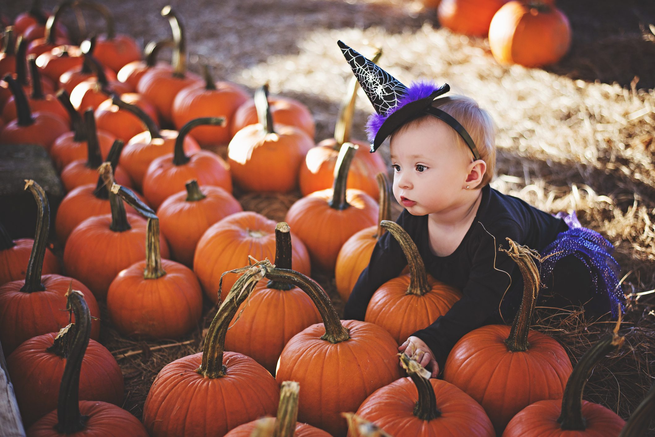 little girl in witch costume in a pumpkin patch