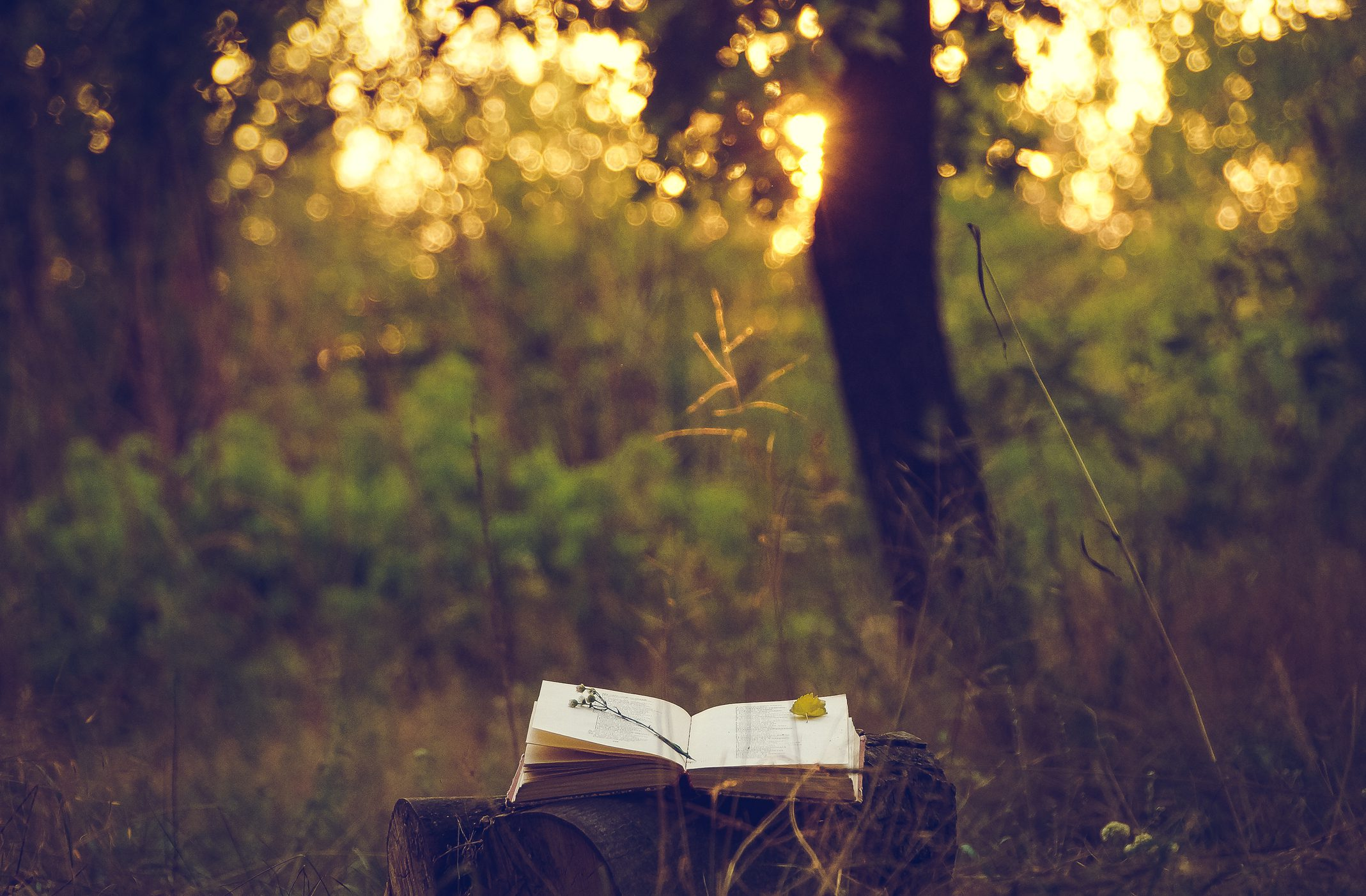 book opened in the woods