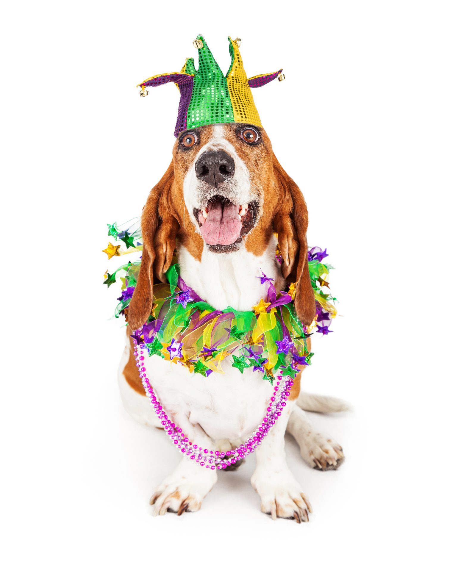 dog wearing mardi gras beads and hat
