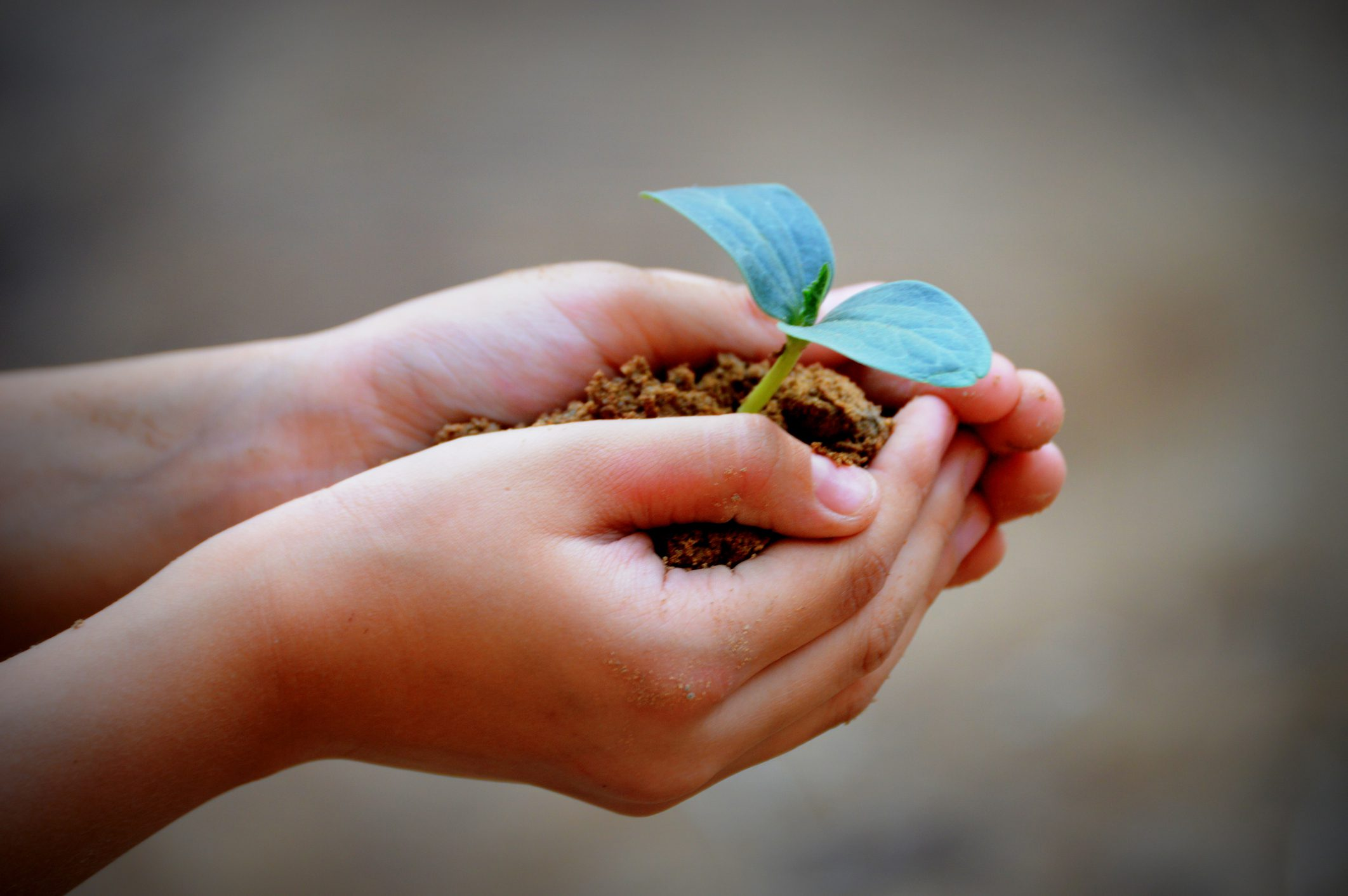 hands holding soil and small plant