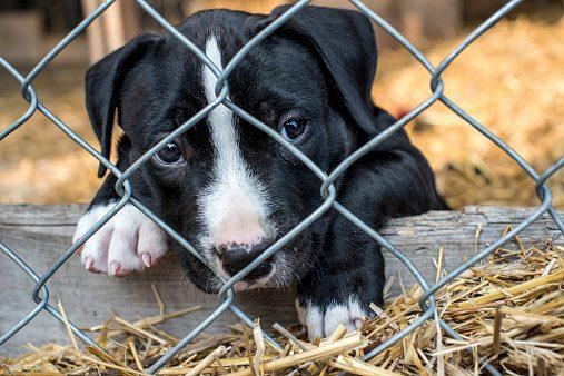 Puppy behind fence