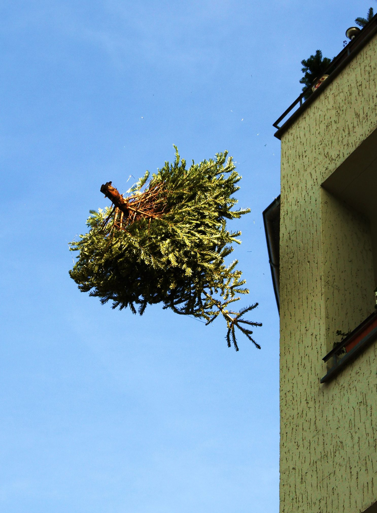 Tree being thrown from roof