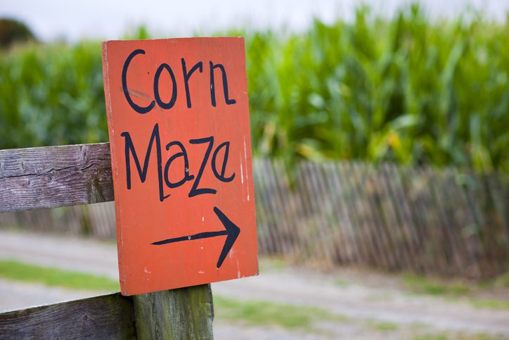 Orange corn maze sign with directional arrow