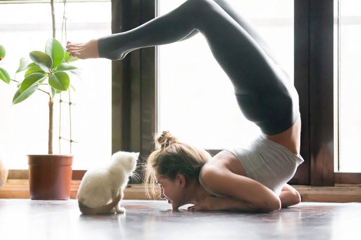 Young attsmiling woman practicing yoga, stretching in Scorpion exercise, variation of vrischikasana pose, working out, wearing sportswear, grey pants, indoor full length, home interior