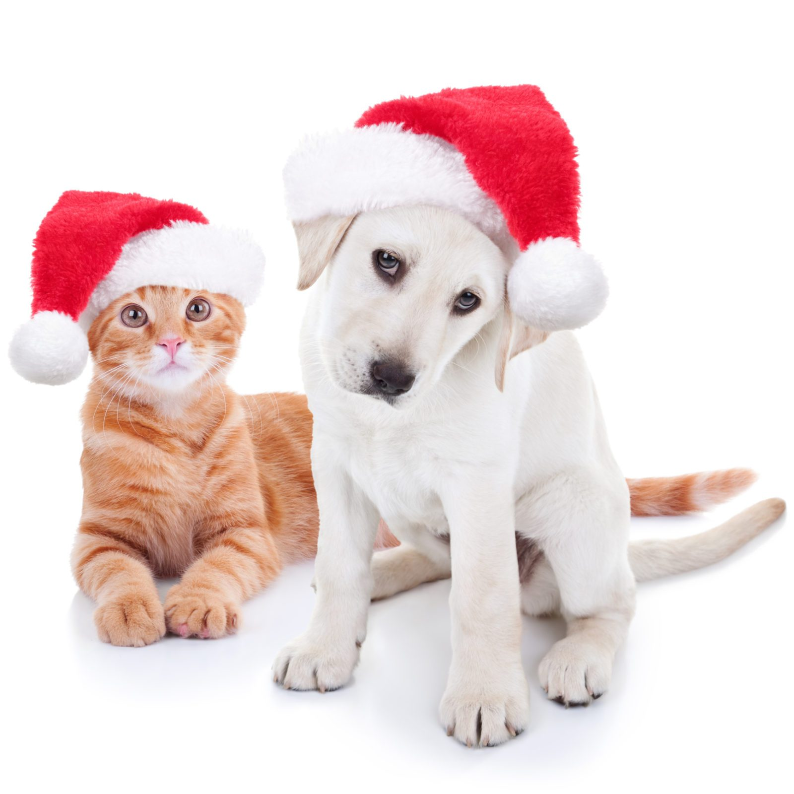 Dog and Cat with Santa Hat