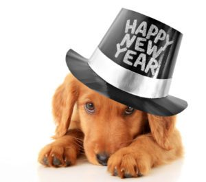 Puppy wearing new years hat