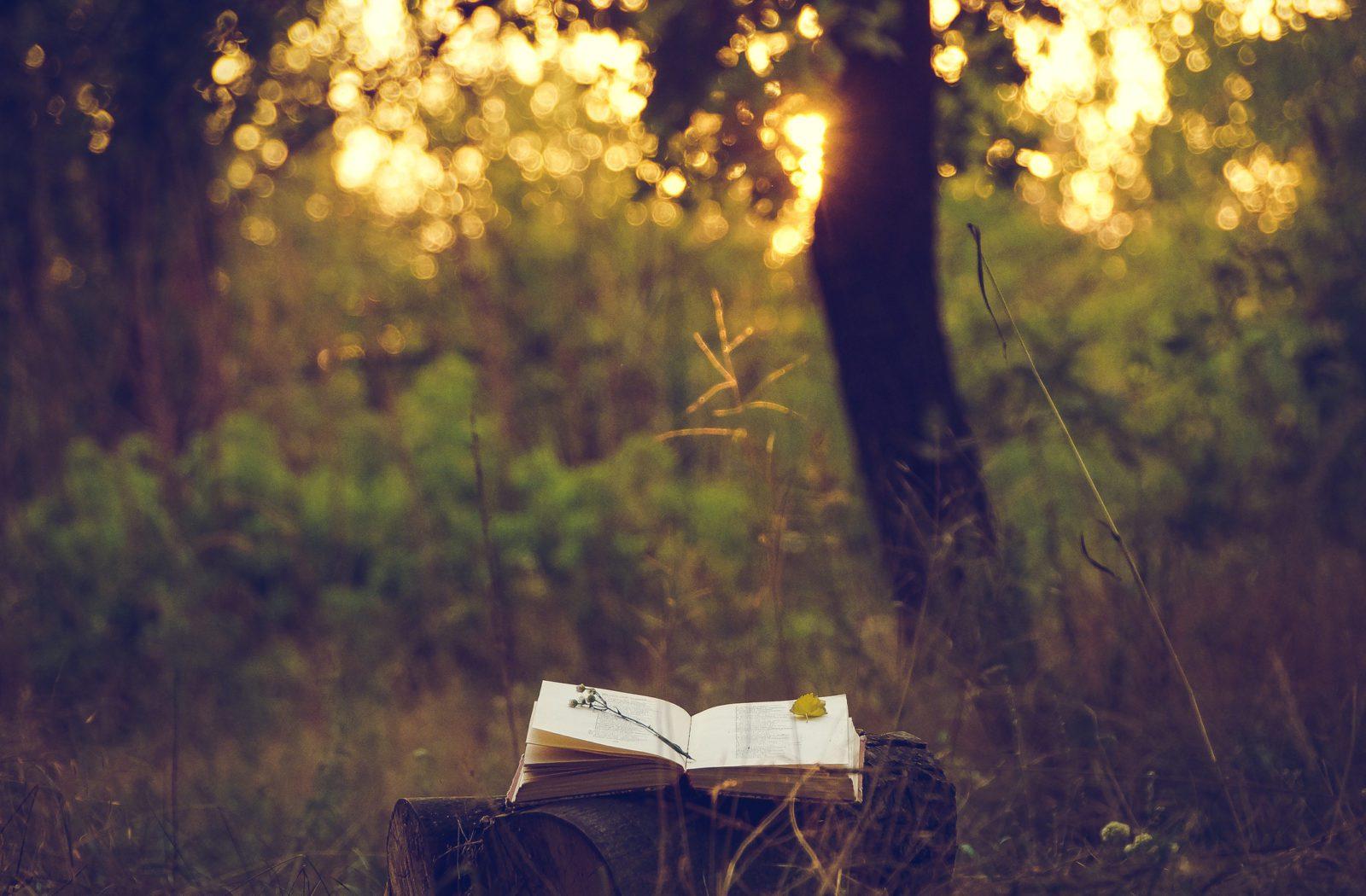 Book Under tree