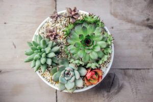 small colorful succulent plants in pot with wooden background