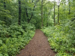 brown mulch trail in the woods with green trees