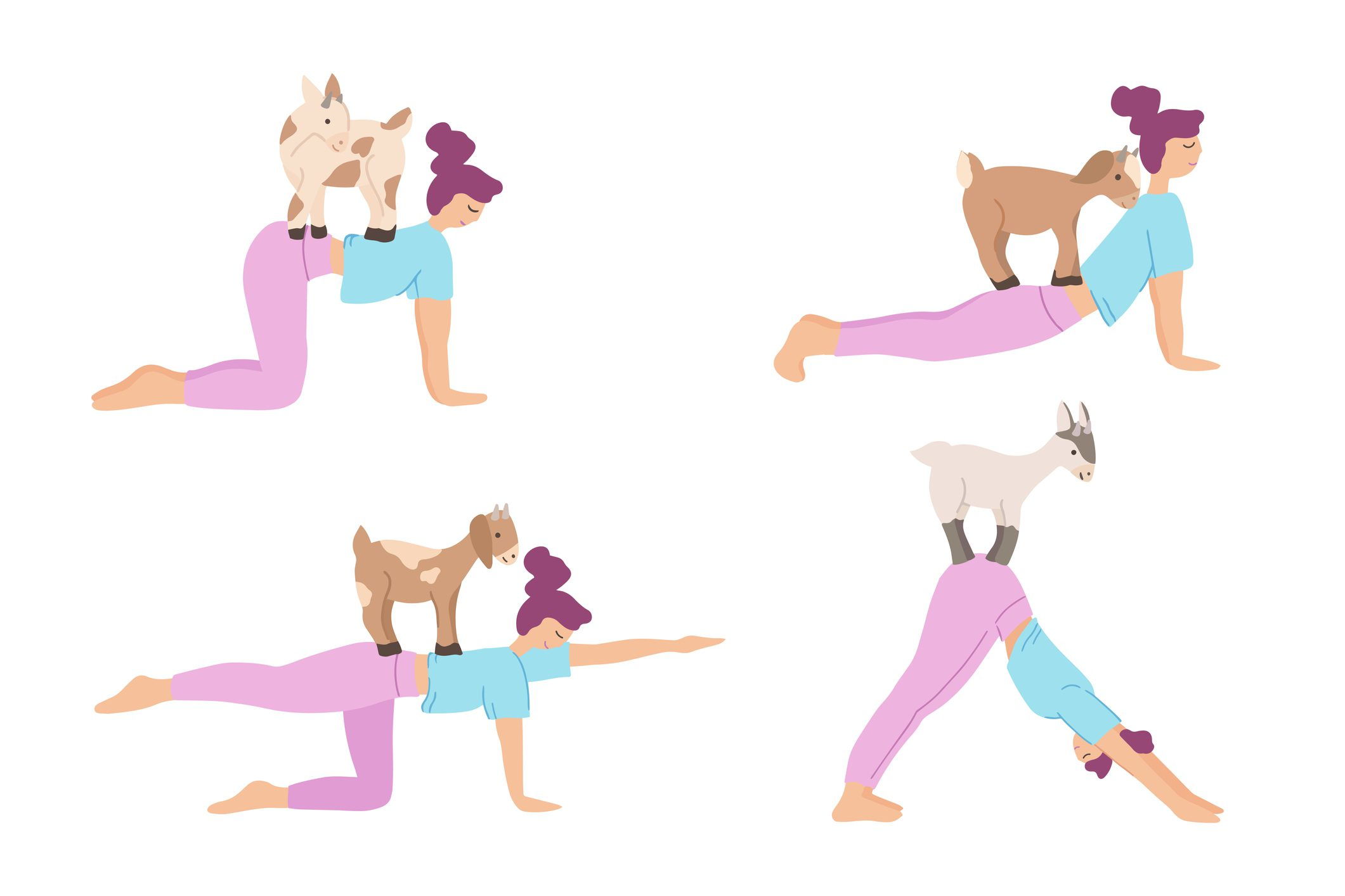 Set of Young women practicing goat yoga. Cute girl characters performing yoga with animals. Vector illustration isolated on white background. Warming up, stretching. Healthy lifestyle concept..