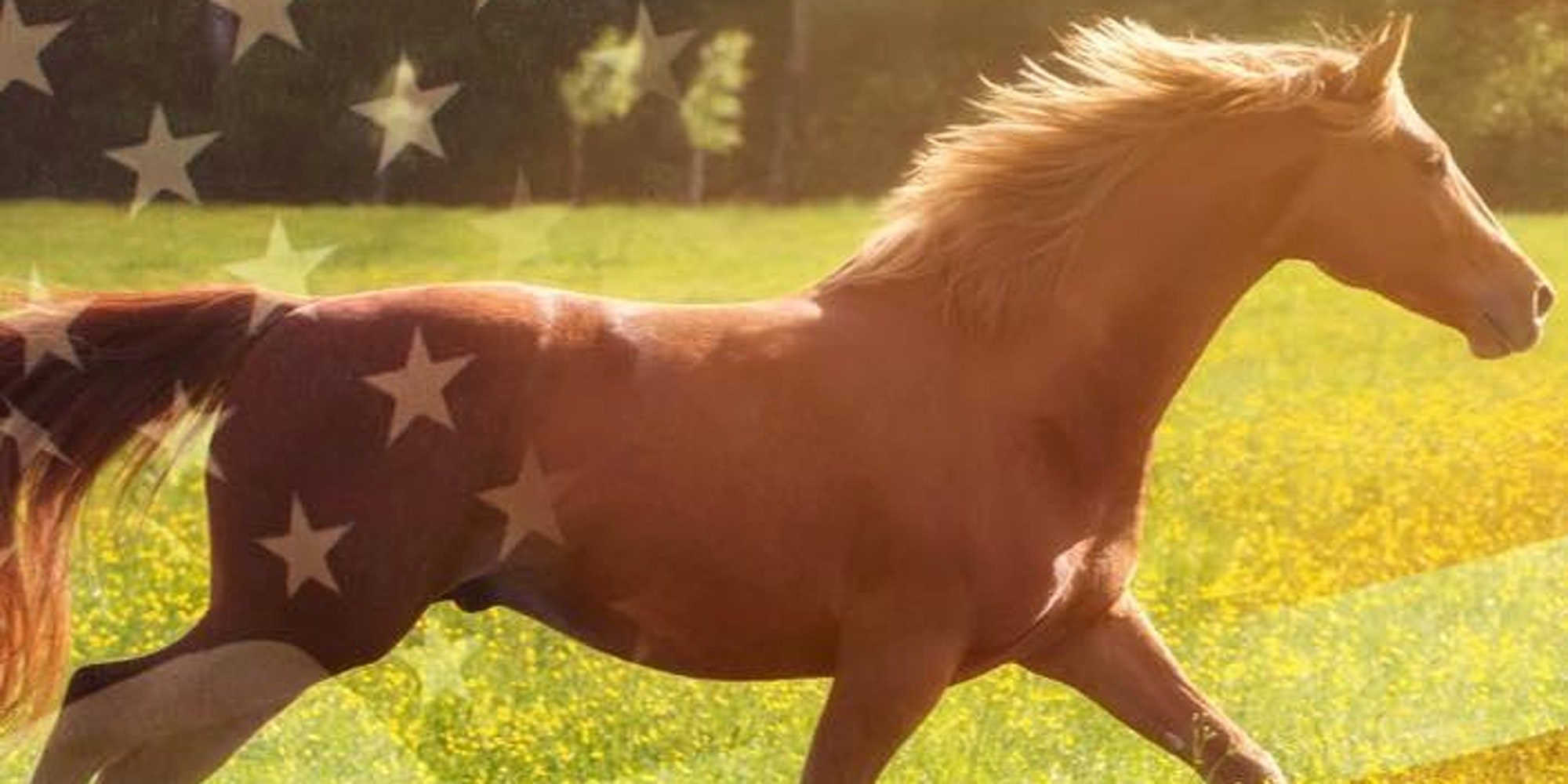American flag with Horse behind